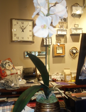 Small Silk Orchid